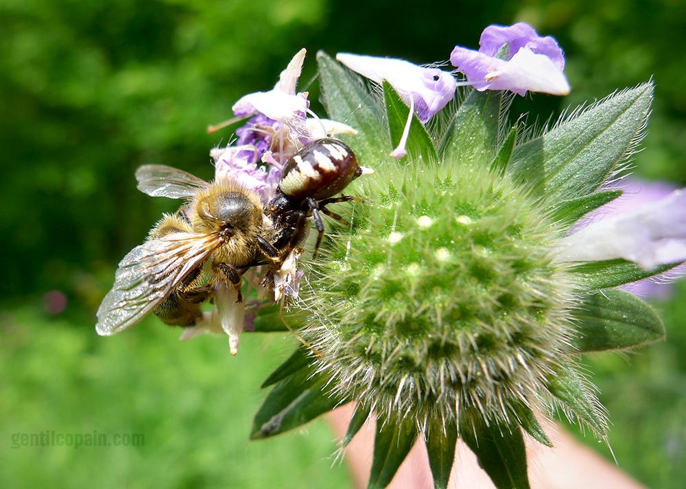 BeeSpiderP1080091